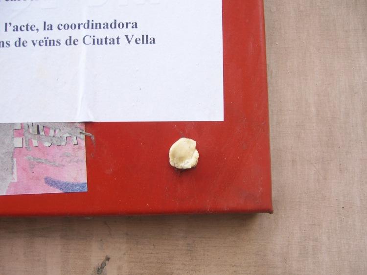 Senderos_El Carme 075